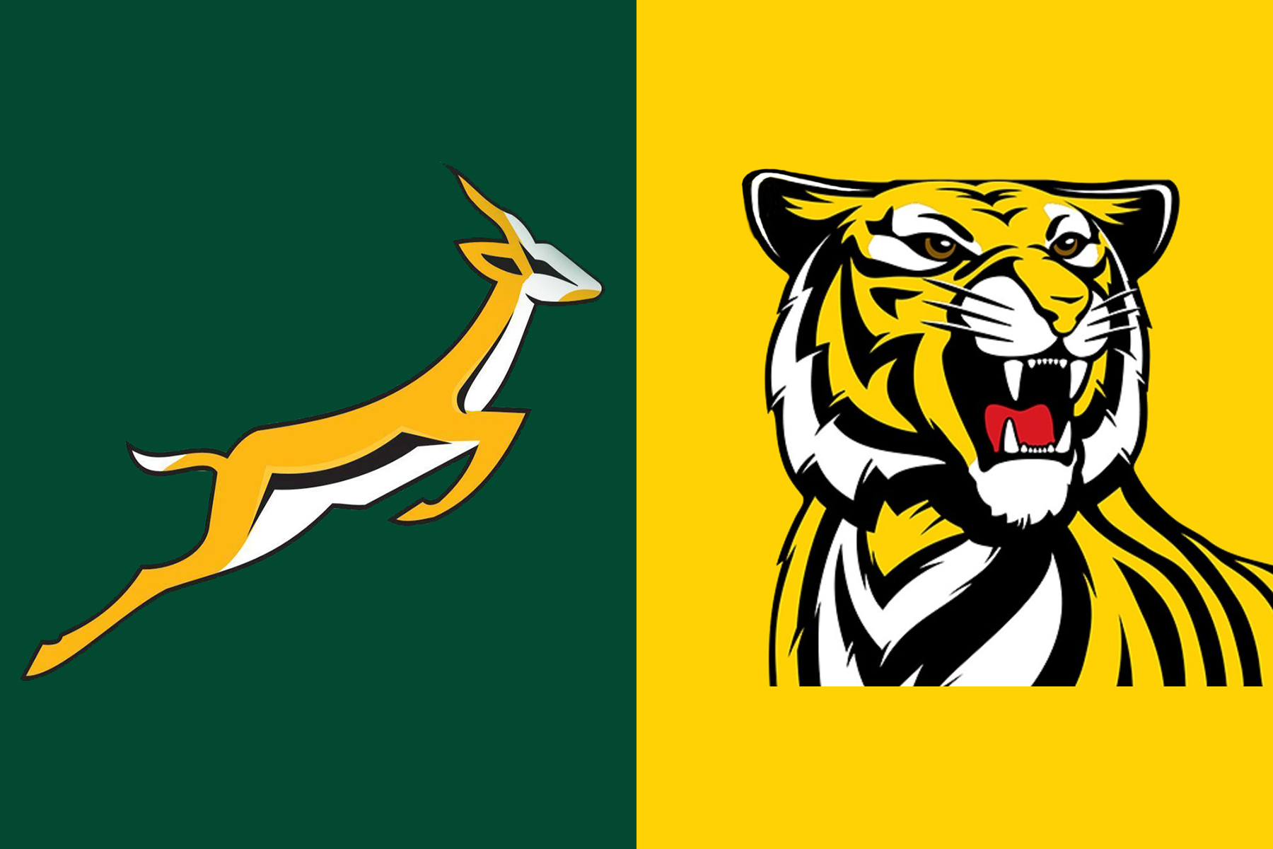 Article image: Springboks and Tigers